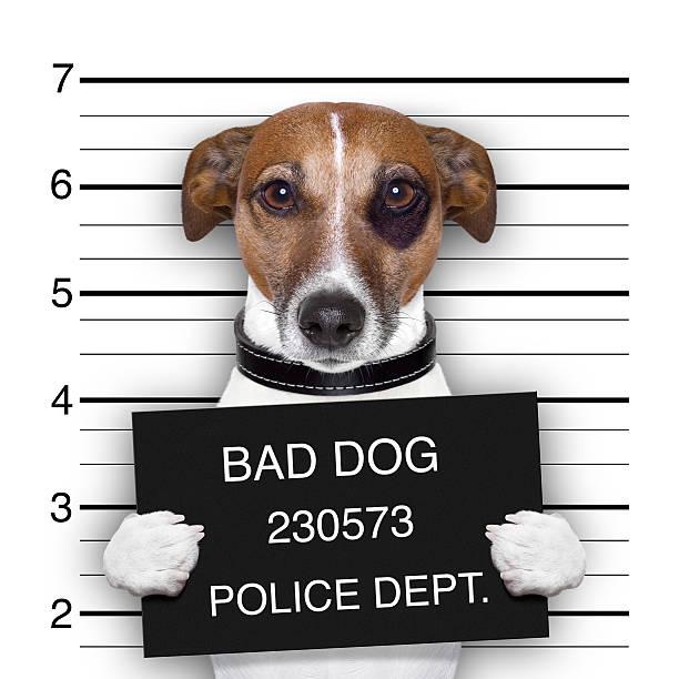 mugshot hund - schlechte laune sprüche stock-fotos und bilder