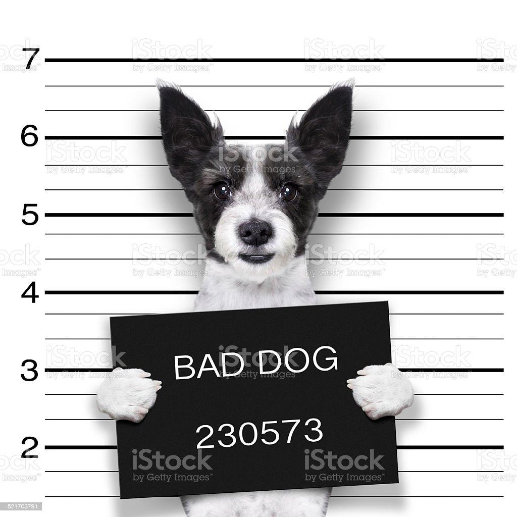 mugshot dog stock photo