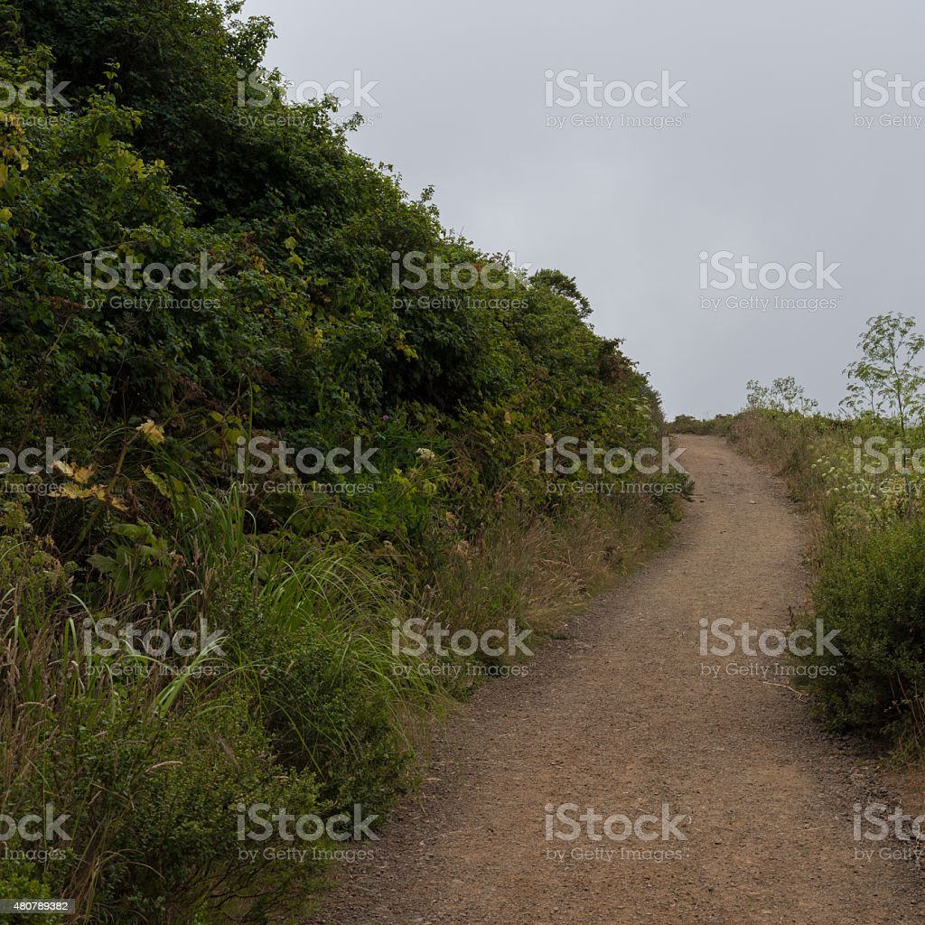Muir Beach Overlook Path stock photo