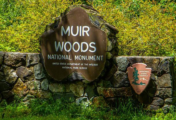 Muir Woods National Monument - California stock photo