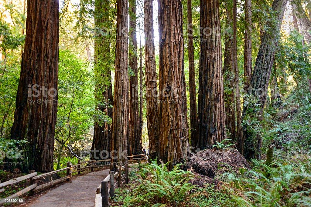 Muir Woods National Monument Stockfoto Und Mehr Bilder Von Abenteuer