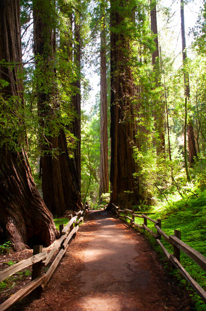 Sentier Muir Woods - Photo