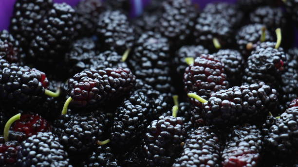 Mulberry Fruits Close Up stock photo