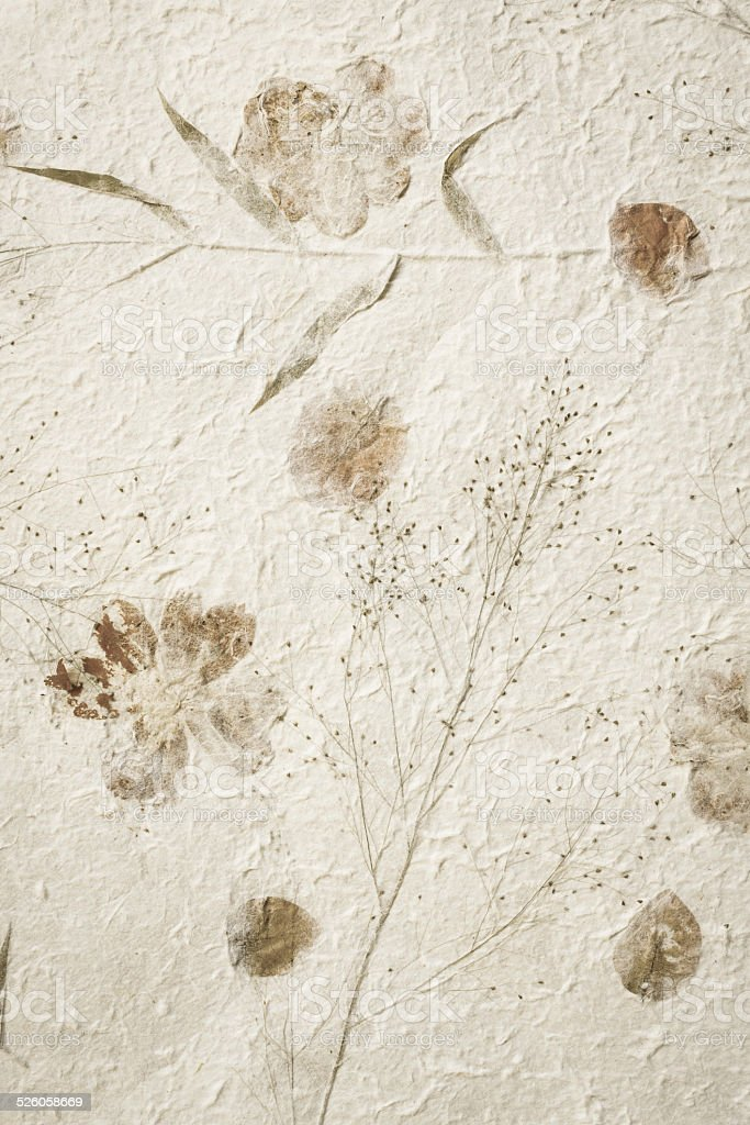 Mulberry paper with dry flower texture background stock photo