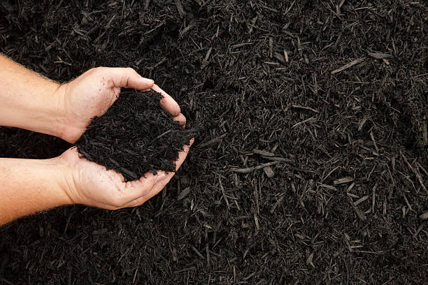 Mulch Hands displaying a handful of dark wood bark mulch scooping stock pictures, royalty-free photos & images
