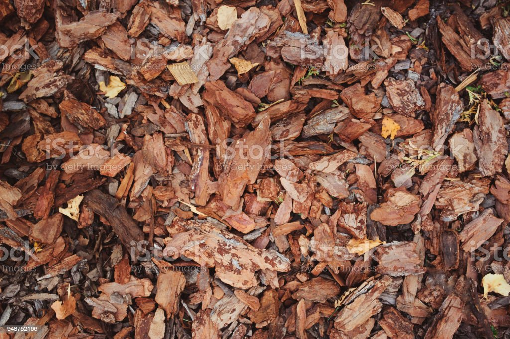 mulching garden beds with pine bark pieces stock photo