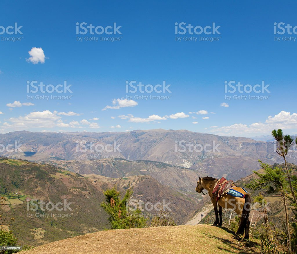 Mule and Andes royalty-free stock photo