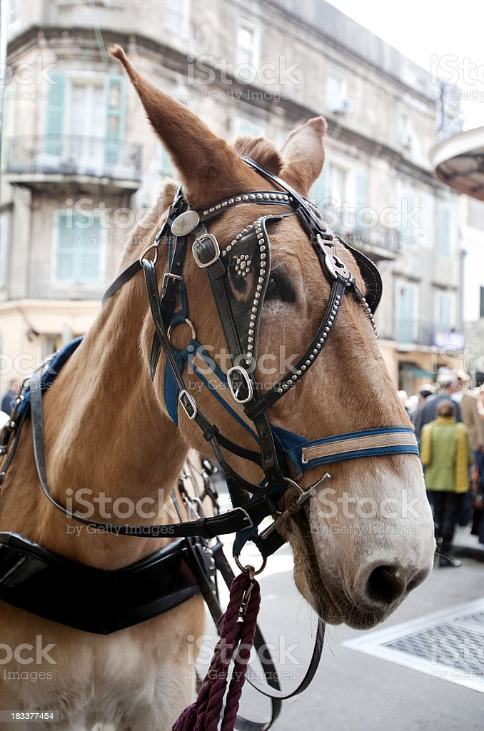 Mule in French Quarter of New Orleans royalty-free stock photo