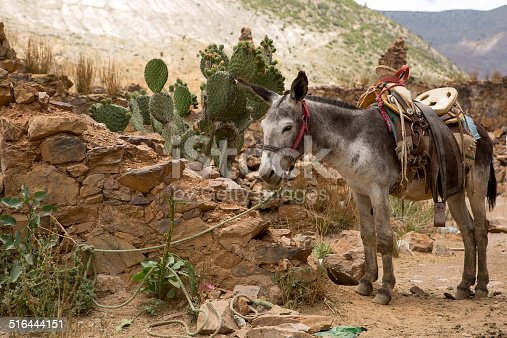 mule with saddle tied with  rope in abandoned town of Real de Catorce