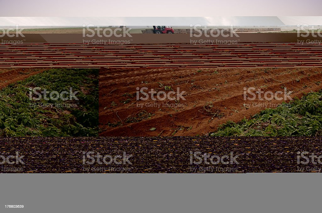 Mule standing at the field royalty-free stock photo