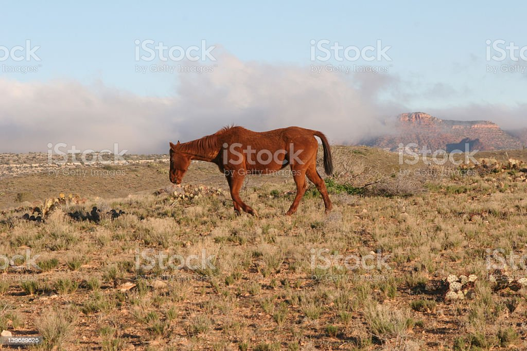 Mule with low-lying clouds and red mountains stock photo