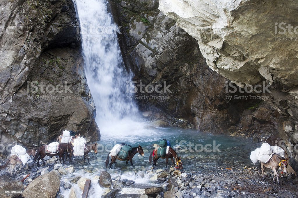 Mules crossing a waterfall on the way to Manang royalty-free stock photo