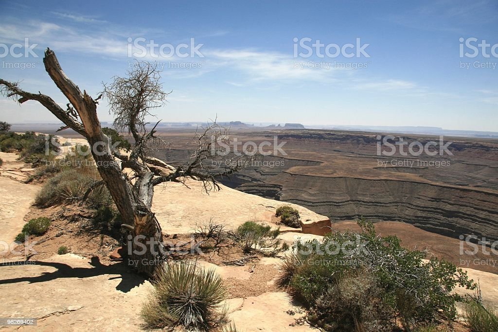 Muley Point Vista, Utah, Southwest USA royalty-free stock photo