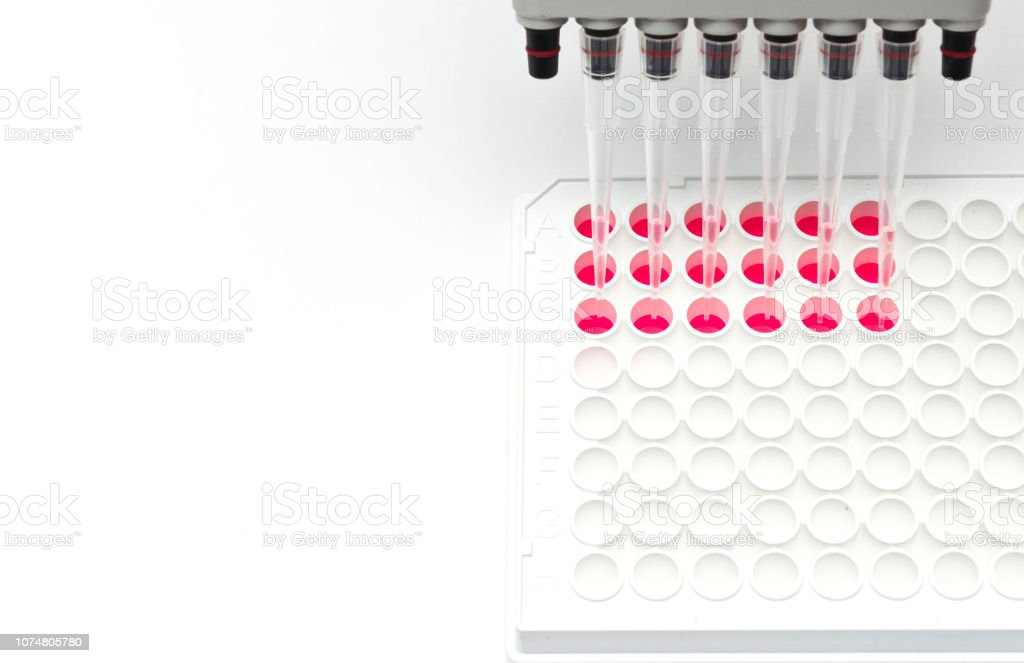 Multi channel pipette and 96 well white plate for cell based assay stock photo