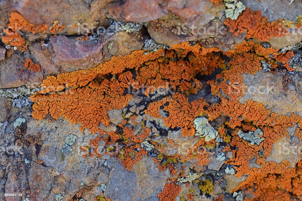 Multi kleur en soorten Crustose korstmossen (organisme dat uit algen of cyanobacteriën en schimmels ontstaat) op een rotsblok in de Oquirrh Mountains in Utah, USA in de buurt van Salt Lake City - Royalty-free Abstract Stockfoto