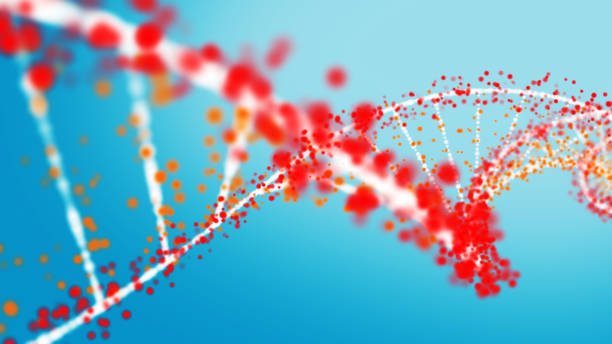 Multi colored DNA strand Multi colored DNA strand helix model stock pictures, royalty-free photos & images
