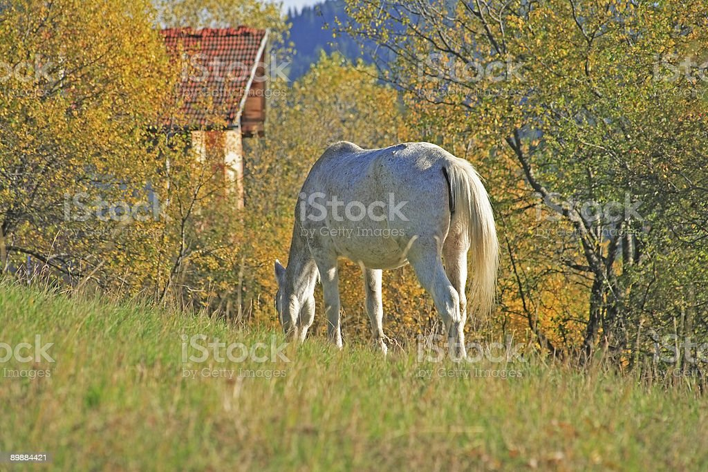 Multi Colored Landscape with Horse royalty-free stock photo
