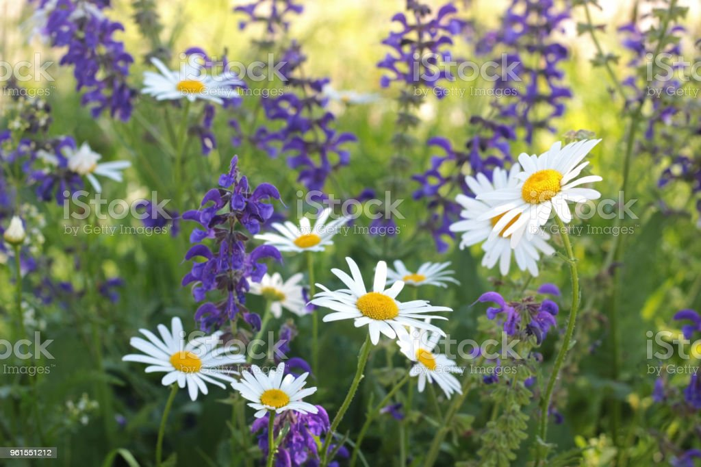 multi colored summer flowers stock photo