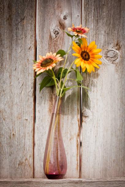 Multi colored sunflowers in vase stock photo