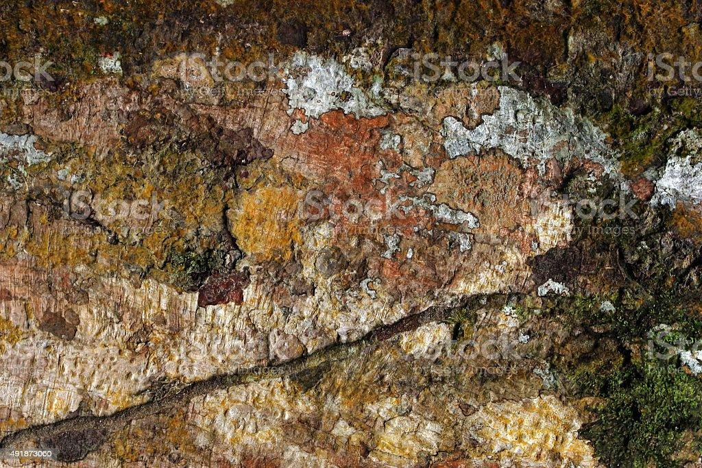 Mehrfarbige Baumrinde und Moos auf Baum – Foto