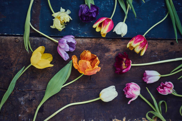 Multi coloured tulips on a rustic wood table stock photo