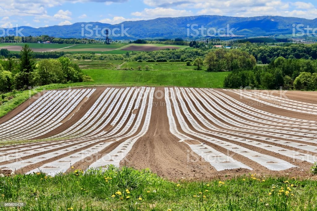 Multi cultivation method - Royalty-free Asahikawa Stock Photo
