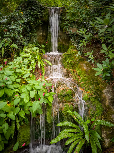 Multi stage waterfall in a woodland stock photo