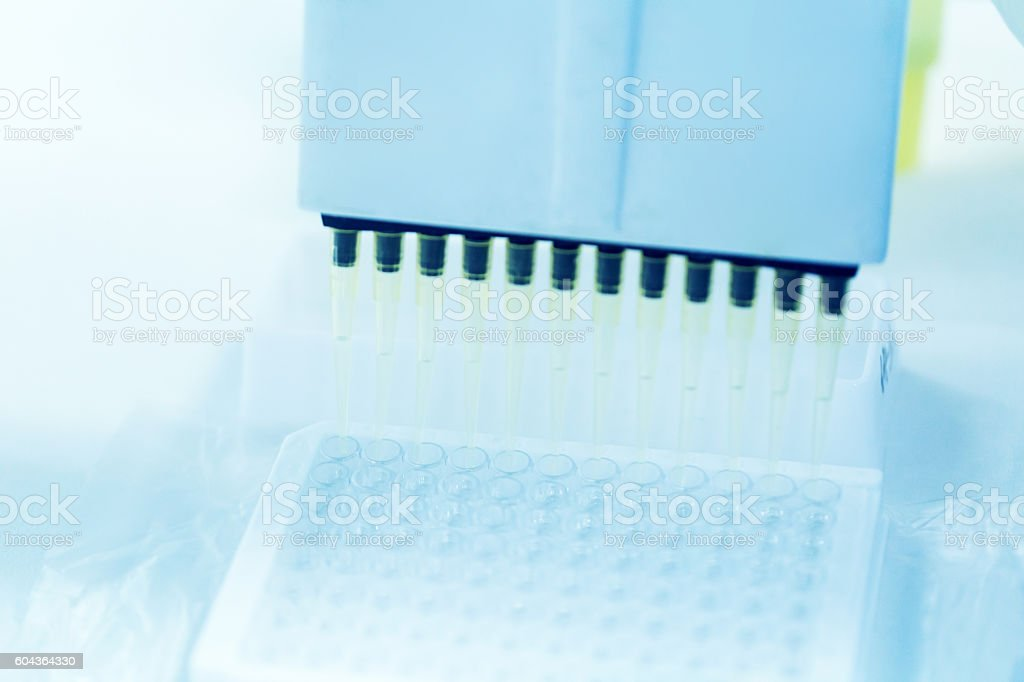 multichannel pipette working in lab stock photo