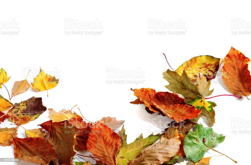 Multicolor autumn dry leafs stock photo