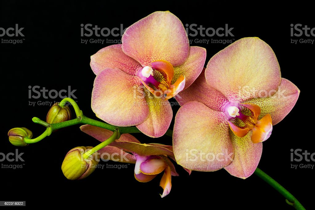 Multicolor orchid flower – Foto