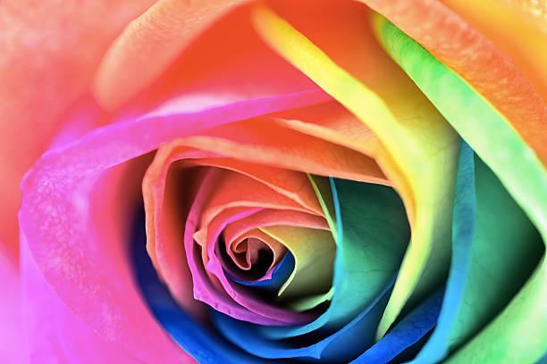 Multicolor rose picture id469101730?b=1&k=6&m=469101730&s=612x612&w=0&h=pjfbqlv7bsnqx2i4rfcmti5widec9qq1 ygv7elyor4=