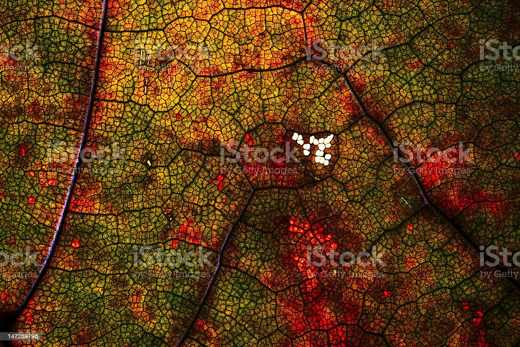 multicolored abstract pattern royalty-free stock photo