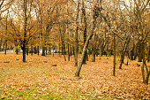 Multicolored autumn landscape with golden leaves in the park,  in Bucharest,  Romania; outdoors