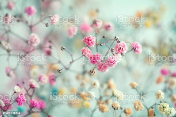 Photo of Multi-colored baby's breath flowers background, soft focus