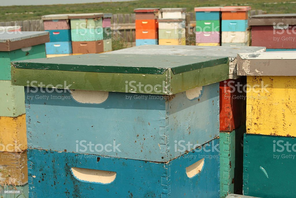 multicolored bee hives stacked upon one another in clover field royalty-free stock photo