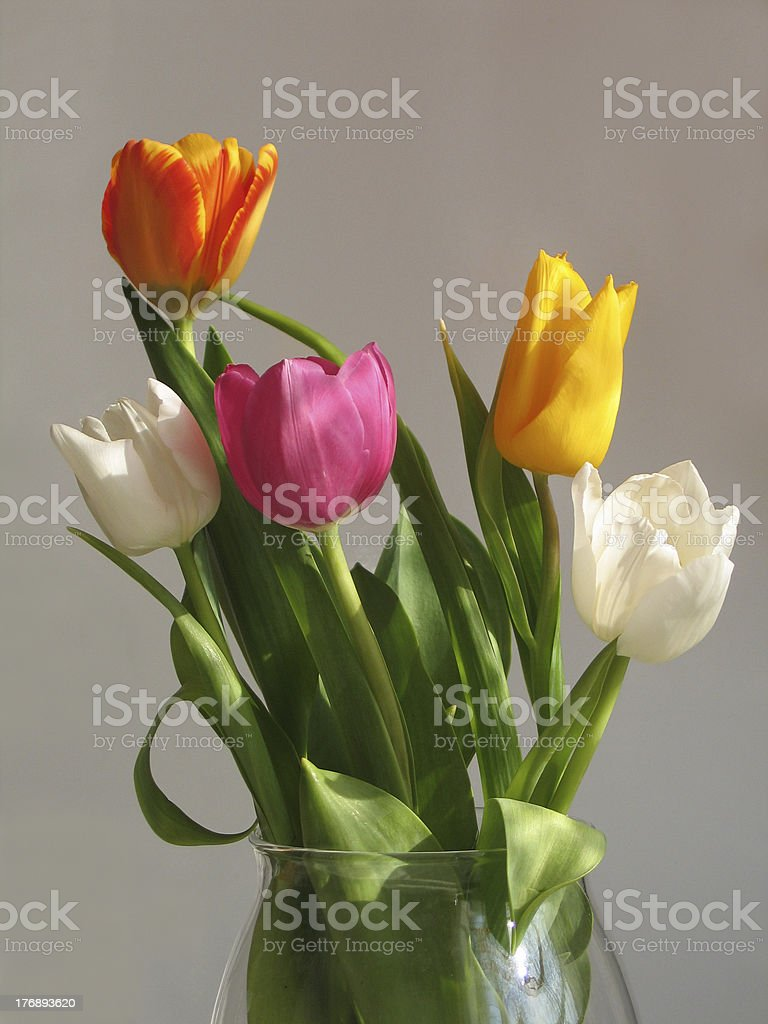 Multicolored bunch of tulips royalty-free stock photo