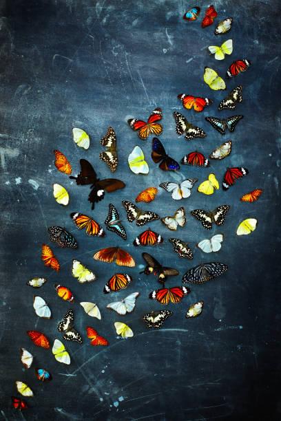 Multicolored butterflies on dark background picture id915251732?b=1&k=6&m=915251732&s=612x612&w=0&h=1s lqasy78y3o6ym3yh2n9i5mhamzrcmeucsj7yalko=