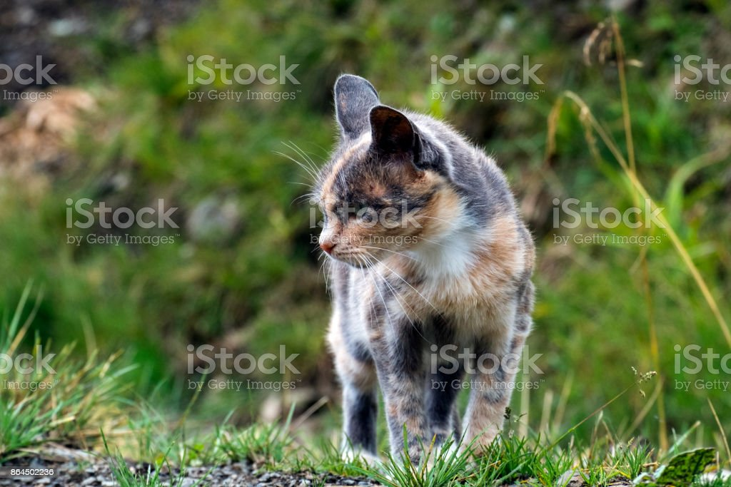 Multicolored cat stopped and alerted ears stock photo