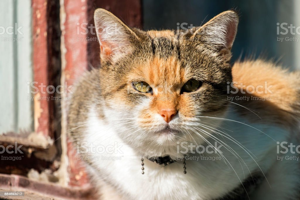 Multi-colored cat with a contemptuous look stock photo