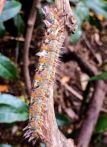 multicolored caterpillar