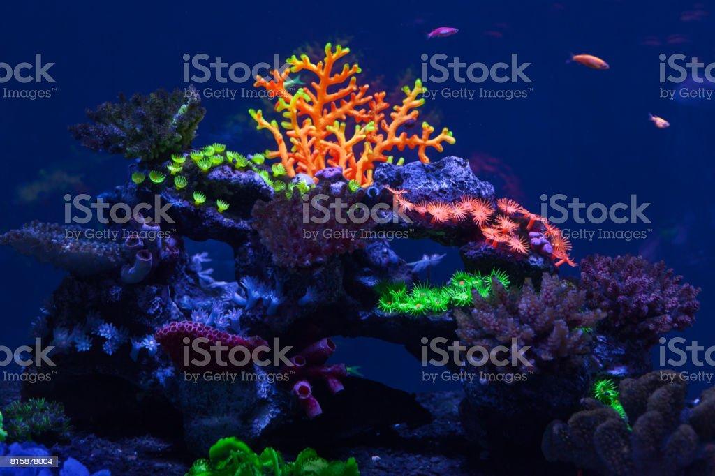 Multicolored corals under water stock photo