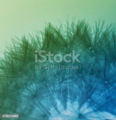 istock Multicolored dandelion seeds 476024065