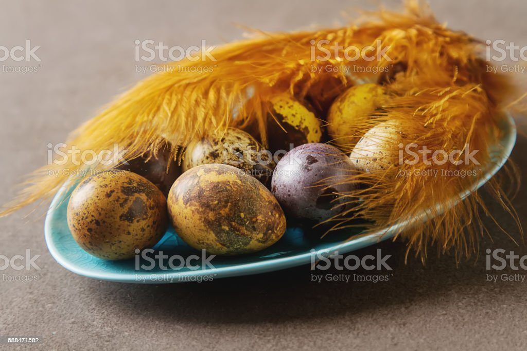 Multi-colored Easter egg. Quail eggs with feathers. Dark background. Spring holiday. stock photo