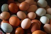 Multicolored Farm Fresh Eggs in Wire Basket, Close Up