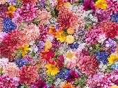 多色の花壁背景クローズ アップ