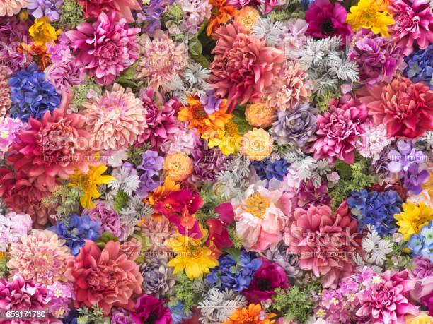 Multicolored flower wall background closeup picture id659171760?b=1&k=6&m=659171760&s=612x612&h=qusuwflxhe yhcb8znacj2s9jty vjtz4a6v9ficogo=