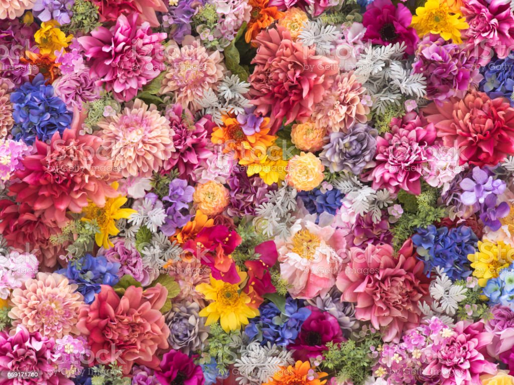 Multi-colored flower wall background close-up stock photo