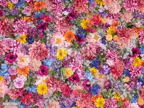 istock Multi-colored flower wall background 659171982