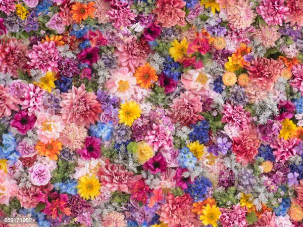 Multicolored flower wall background picture id659171982?b=1&k=6&m=659171982&s=612x612&h=w8kveqydytwzbb8pg5liju7ycbrfoofsaefvmowpgkc=