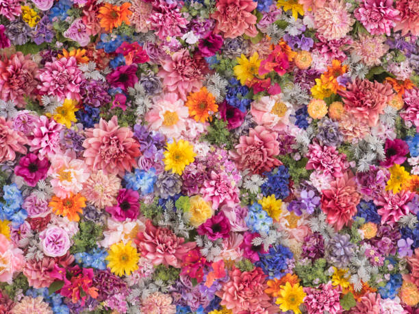 Multi-colored flower wall background Wall made of multi-colored, colorful flowers. single flower stock pictures, royalty-free photos & images